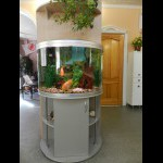 Аквариум с экзотическими рыбками поможет Вам расслабиться и отдохнуть
